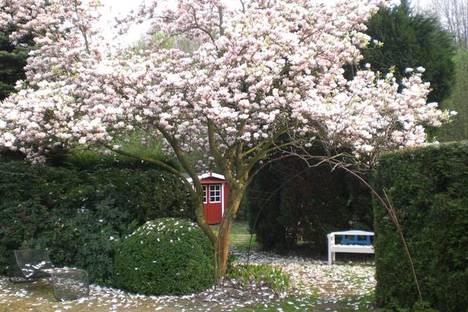 Garten mit Magnolie. Courtesy of Klaus-Dieter Bürklein